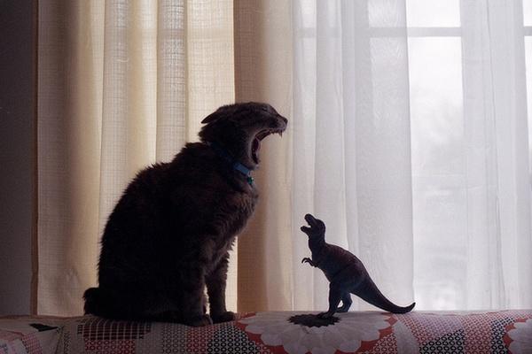 evoluzione felina Questa è la storia di un gatto senza memoria