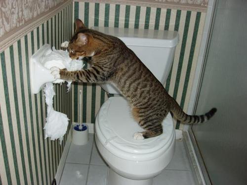 attacco alla carta igienica