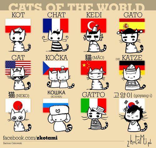 Miao, meow!