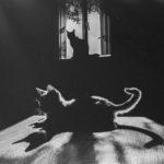 gattosilver
